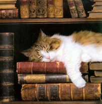 Image result for sleepy reader